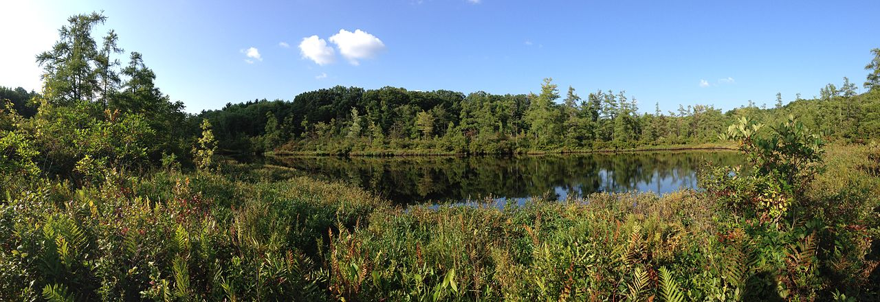 1280px-Triangle_Lake_Bog_State_Nature_Preserve_-_Panorama_of_Triangle_Lake,_Aug_2013